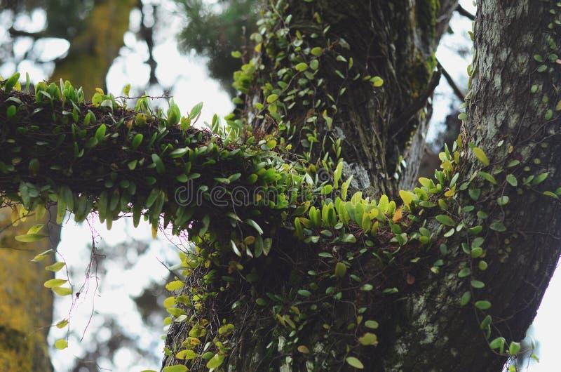 Primo piano del parassita sul ramo di albero fotografia stock