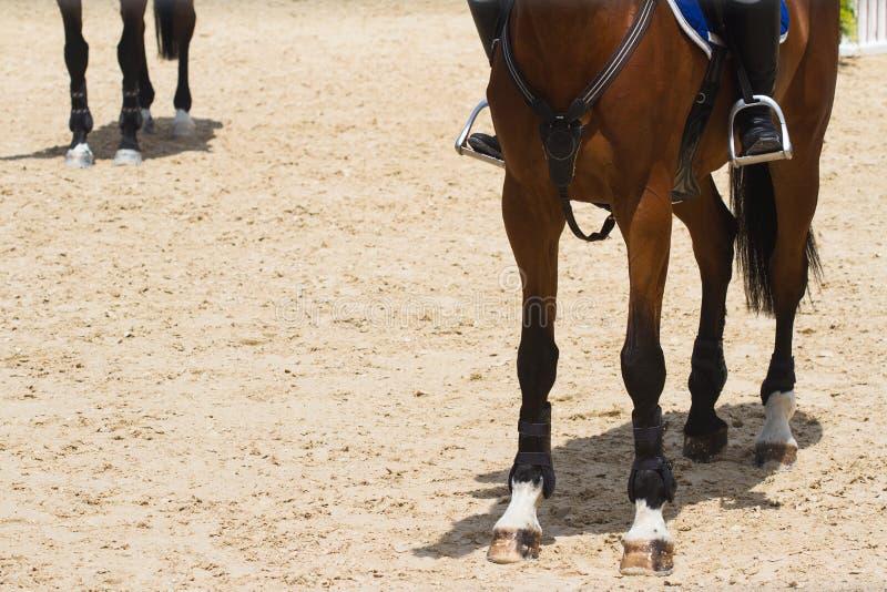 Primo piano del piede marrone del cavallo da corsa immagini stock libere da diritti