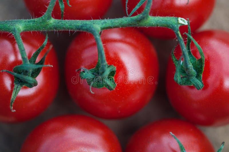 Primo piano del pomodoro del cocktail fotografia stock