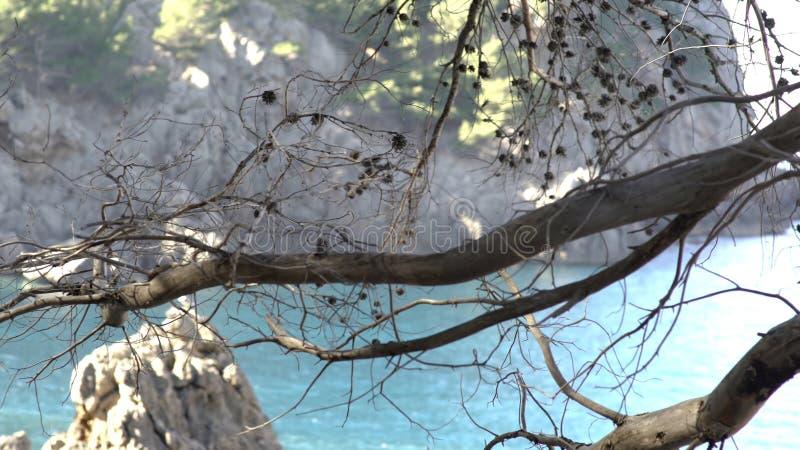 Primo piano del ramo di albero secco su fondo delle rocce e del mare Arte Bello giorno caldo sulla spiaggia con l'albero appassit immagini stock