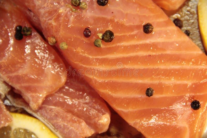 Primo piano del salmone del pesce fotografia stock