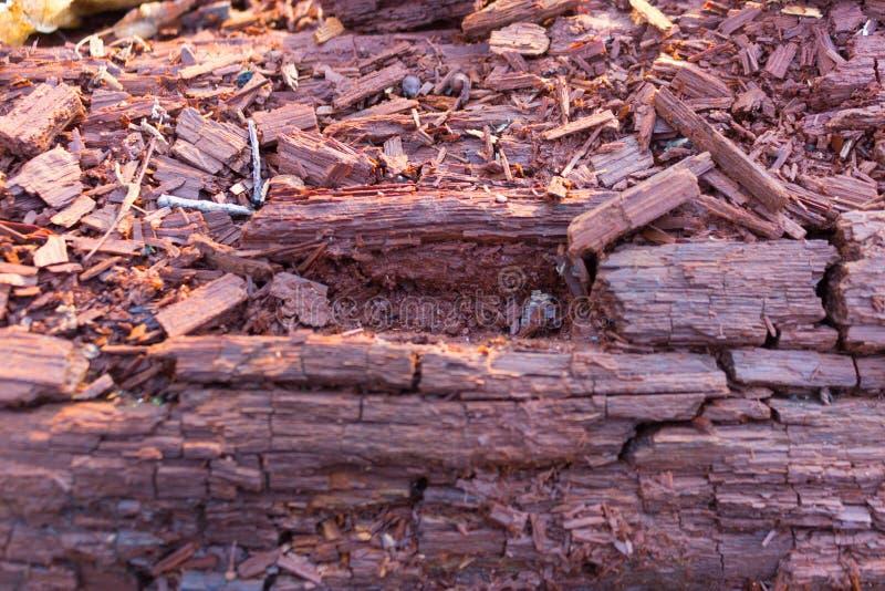 Primo piano del tronco di albero mouldering fotografie stock