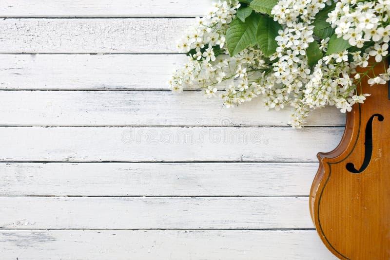 Primo piano del violino con i bei rami di albero di fioritura su fondo bianco immagine stock libera da diritti