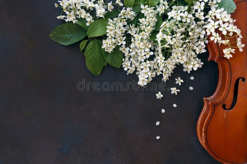 Primo piano del violino con i bei rami di albero di fioritura su fondo nero fotografie stock