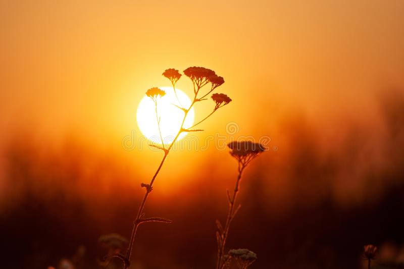 Primo piano dell'erba contro il tramonto arancio Profondit? di campo bassa, immagine tonificata fotografie stock