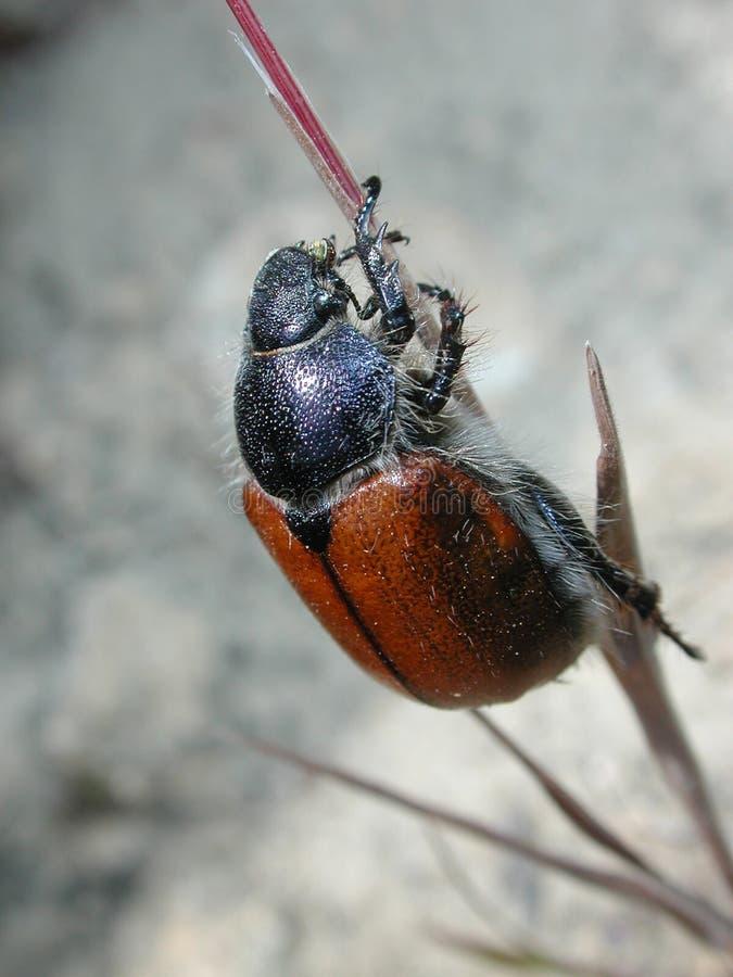 Primo piano dell'errore di programma dello scarabeo fotografia stock libera da diritti