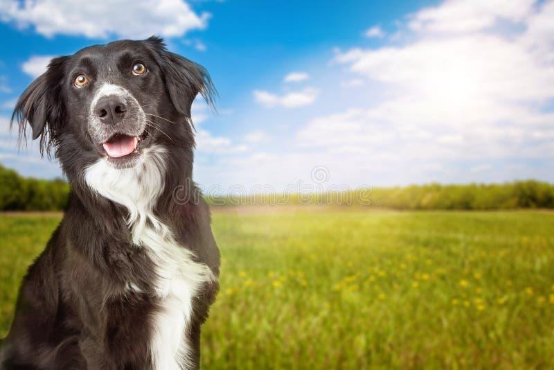 Primo piano dell'incrocio giallo felice del cane di Labrador immagine stock libera da diritti
