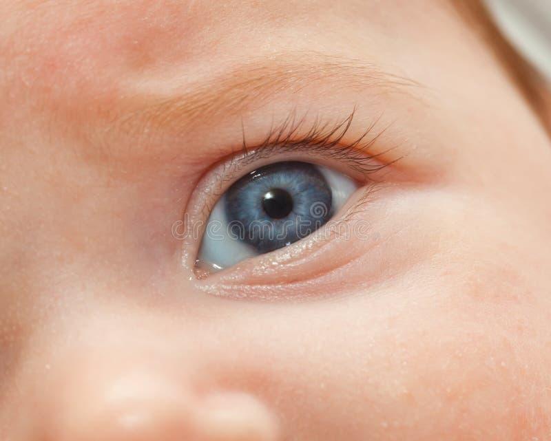 Primo piano dell'occhio azzurro neonato fotografia stock libera da diritti
