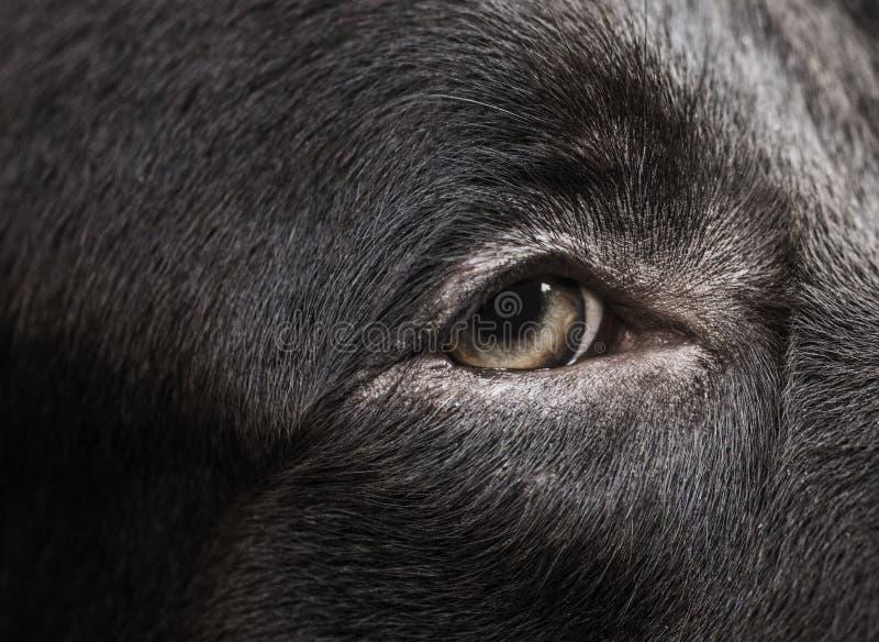 Primo piano dell'occhio del cane fotografie stock