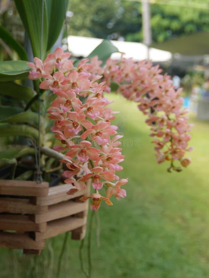 Primo piano dell'orchidea arancio su uno sfondo naturale variopinto immagini stock