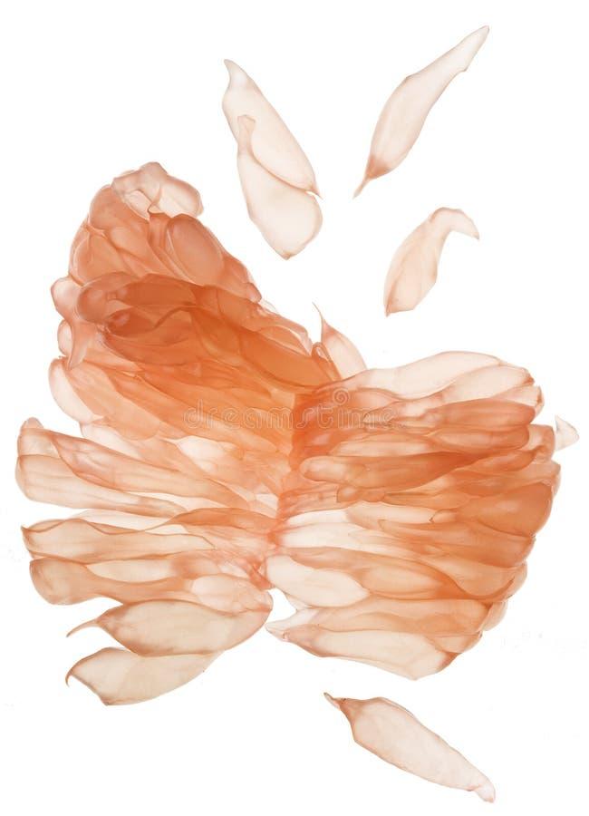 Primo piano della carne del pompelmo nessuna pelle immagine stock