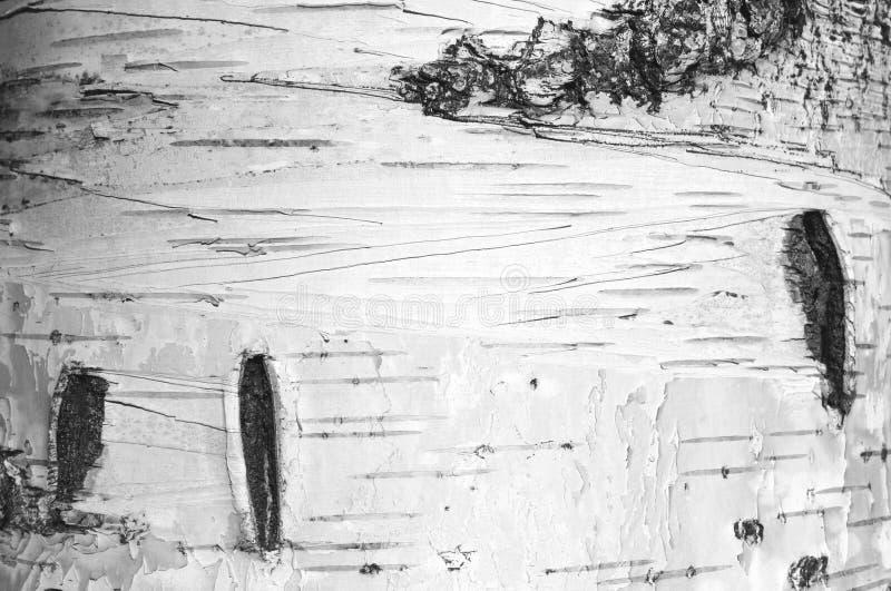 Primo piano della carta dello sfondo naturale di struttura della corteccia di betulla/foto in bianco e nero fotografia stock libera da diritti