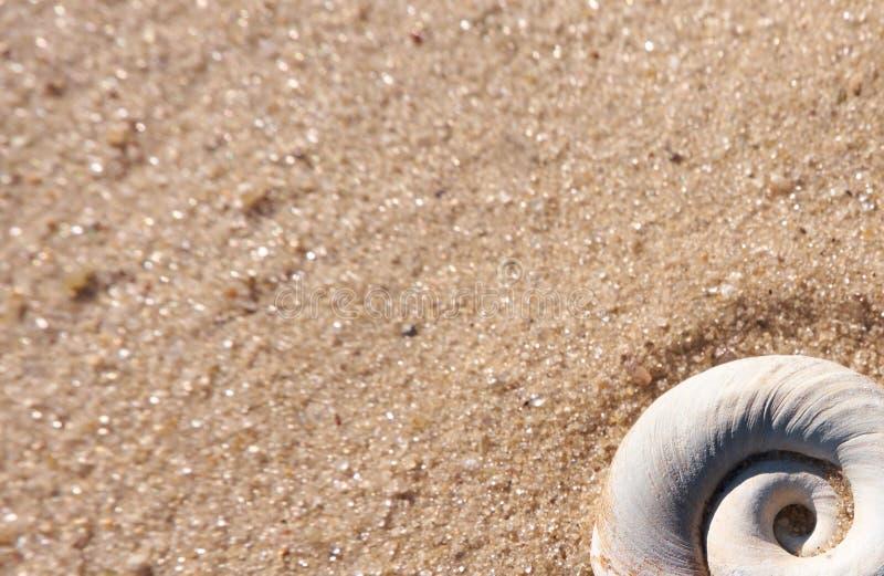 Primo piano della conchiglia su una sabbia della spiaggia di estate fotografia stock libera da diritti