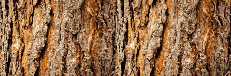 Primo piano della corteccia di albero, disposizione orizzontale fotografia stock libera da diritti