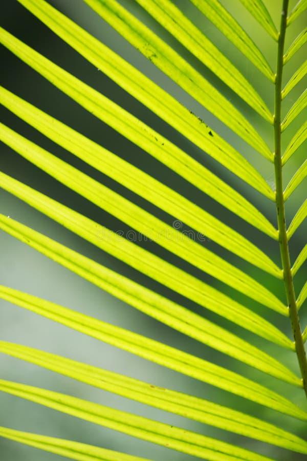 Primo piano della foglia della palma immagini stock libere da diritti