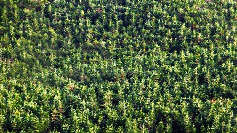 Primo piano della foresta con molti alberi immagine stock libera da diritti