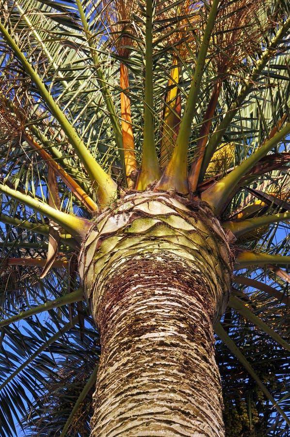 Primo piano della palma fotografie stock