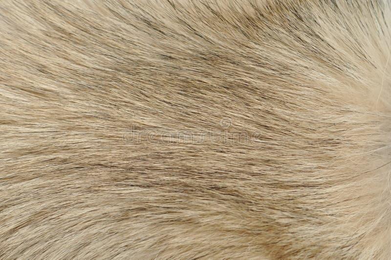 Primo piano della pelliccia del cane
