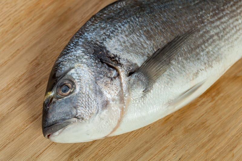 Primo piano della testa del pesce di dorado immagine stock