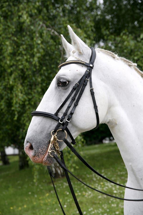Primo piano della testa di cavallo su sfondo naturale verde immagini stock libere da diritti