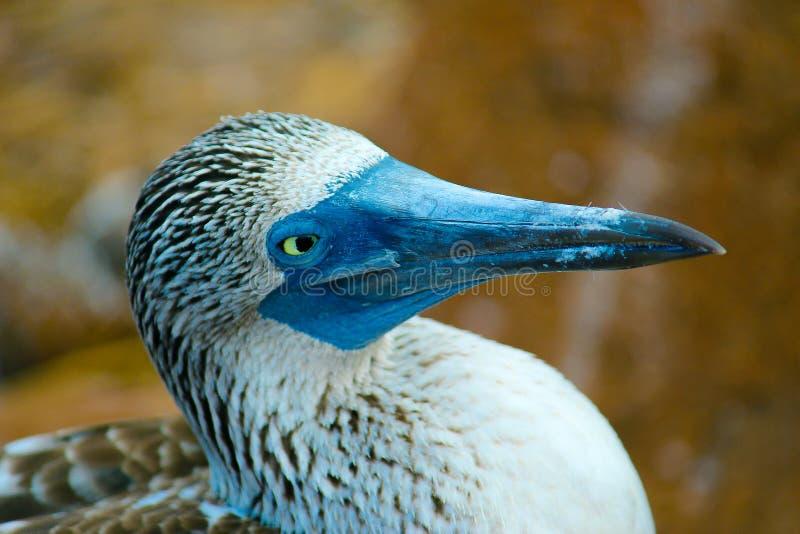 Primo piano della testa di legno pagato blu fotografia stock