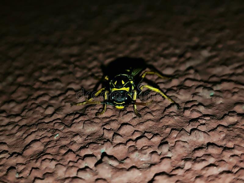 Primo piano della vespa alla notte immagine stock libera da diritti