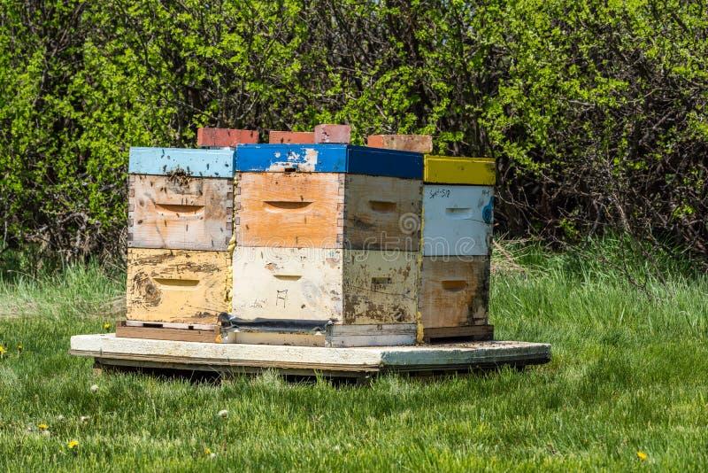 Primo piano delle api che ronzano intorno agli alveari fotografia stock