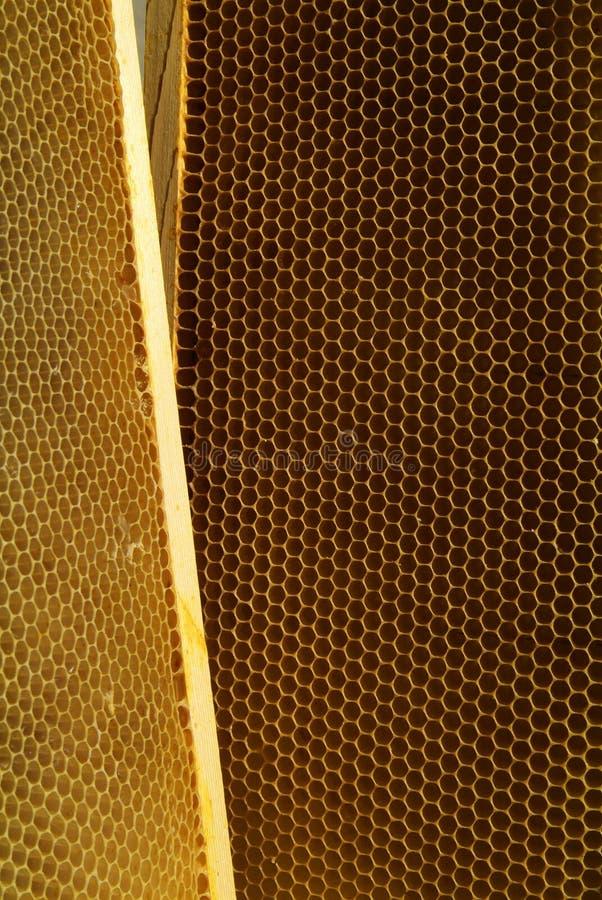 Download Primo Piano Delle Api Sul Favo In Arnia Immagine Stock - Immagine: 107525675