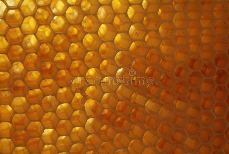 Download Primo Piano Delle Api Sul Favo In Arnia Immagine Stock - Immagine: 107526489