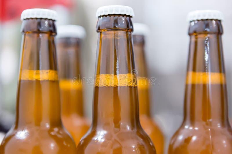 Primo piano delle bottiglie in pieno di birra immagine stock libera da diritti