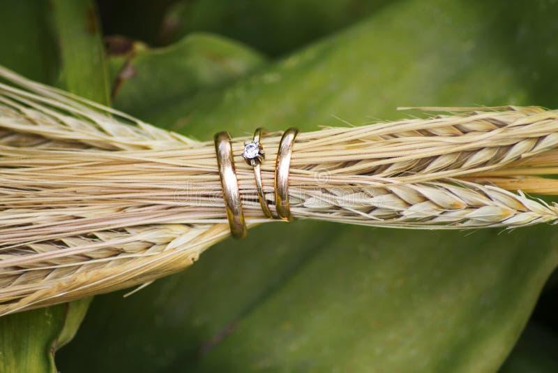 Primo piano delle fedi nuziali nelle orecchie di grano fotografia stock libera da diritti