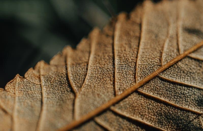 Primo piano delle foglie di autunno variopinte Primo piano estremo immagini stock