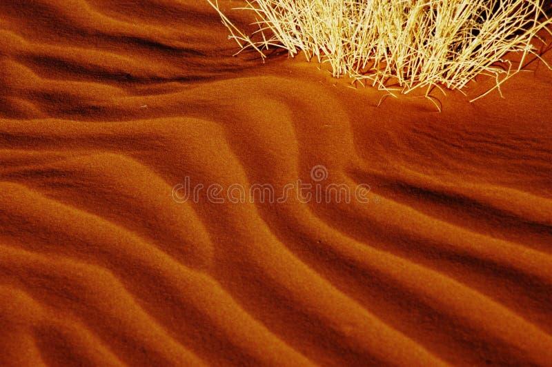 Primo piano delle ondulazioni della duna, Namibia fotografie stock libere da diritti