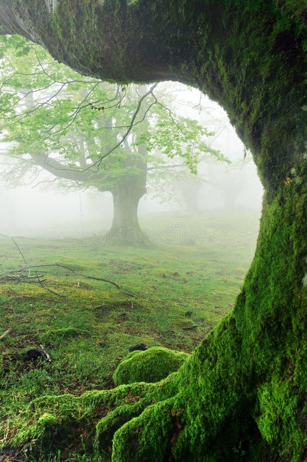 Primo piano delle radici dell'albero sulla foresta fotografia stock