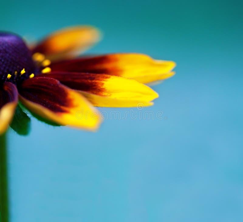 Primo piano di bello fiore immagini stock libere da diritti