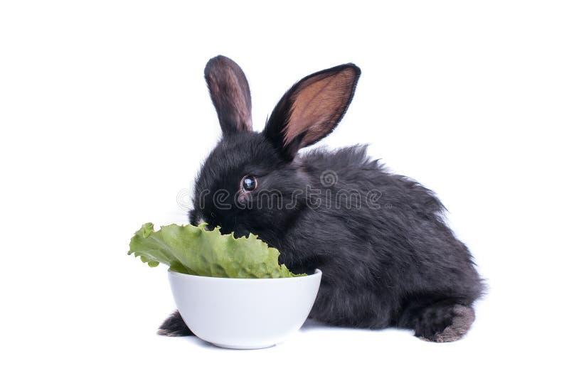 Primo piano di coniglio nero sveglio che mangia insalata verde fotografie stock libere da diritti