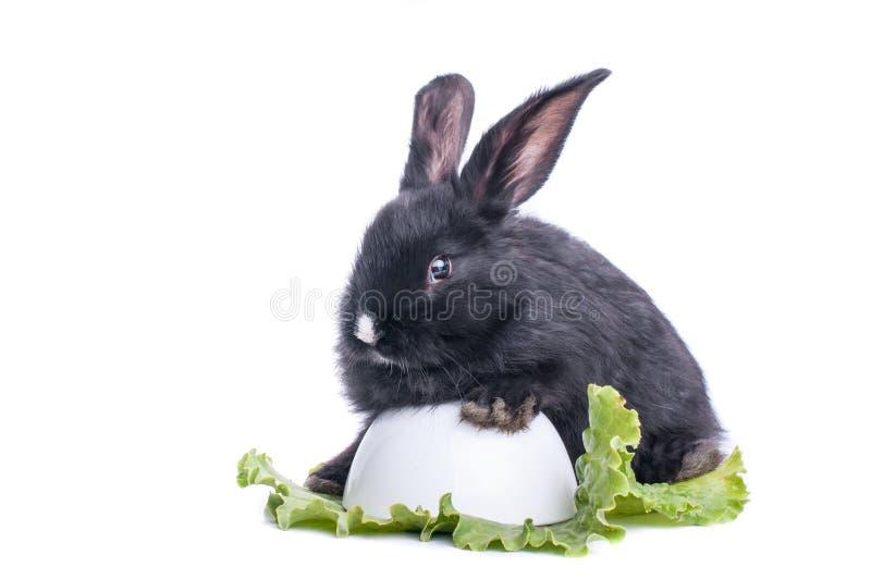 Primo piano di coniglio nero sveglio che mangia insalata verde immagini stock