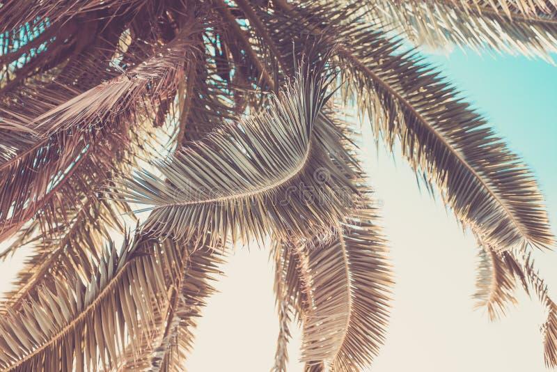 Primo piano di foglia di palma nella tonalità d'annata backgrounds immagini stock