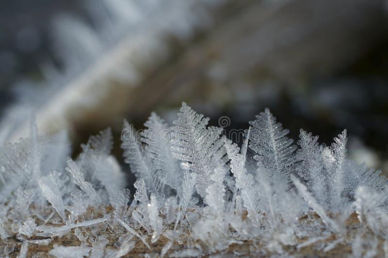 Primo piano di gelo immagine stock