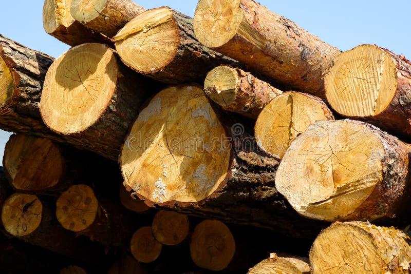 Primo piano di legno dei ceppi impilato in un mucchio immagini stock libere da diritti