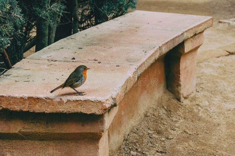 Primo piano di piccolo uccello su un banco di pietra immagini stock