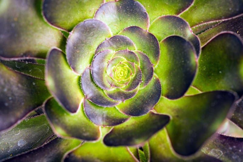Primo piano di specie del cactus fotografia stock