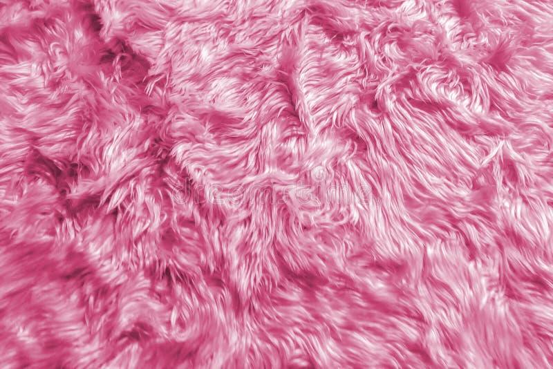 Primo piano di struttura lanuginosa animale romantica morbida naturale della lana della pelliccia di rosa pastello per il materia fotografie stock