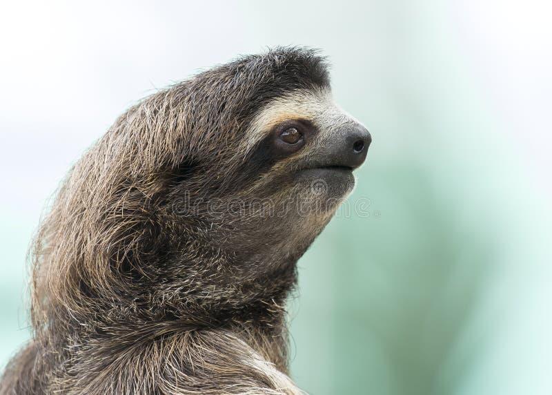 Foto bradipo scarica