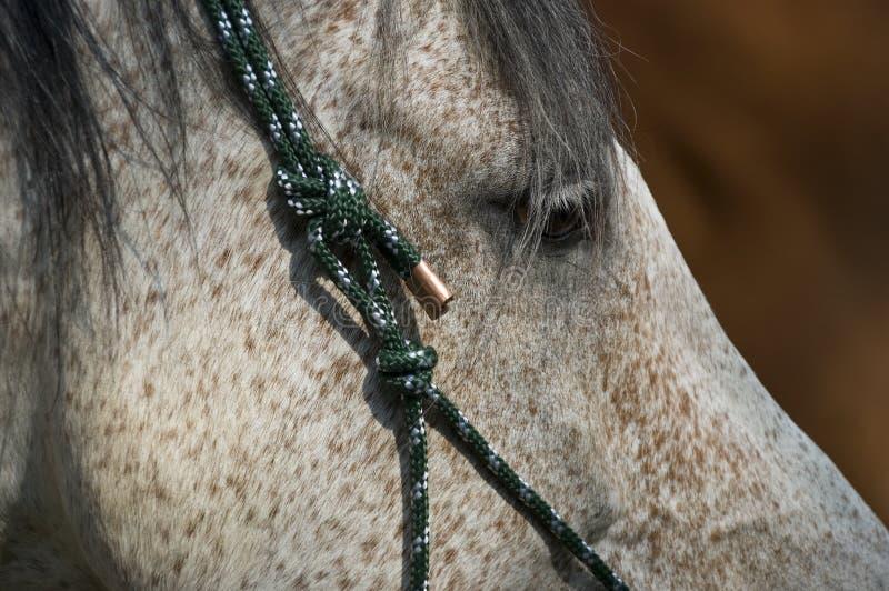 Primo piano di un cavallo immagine stock