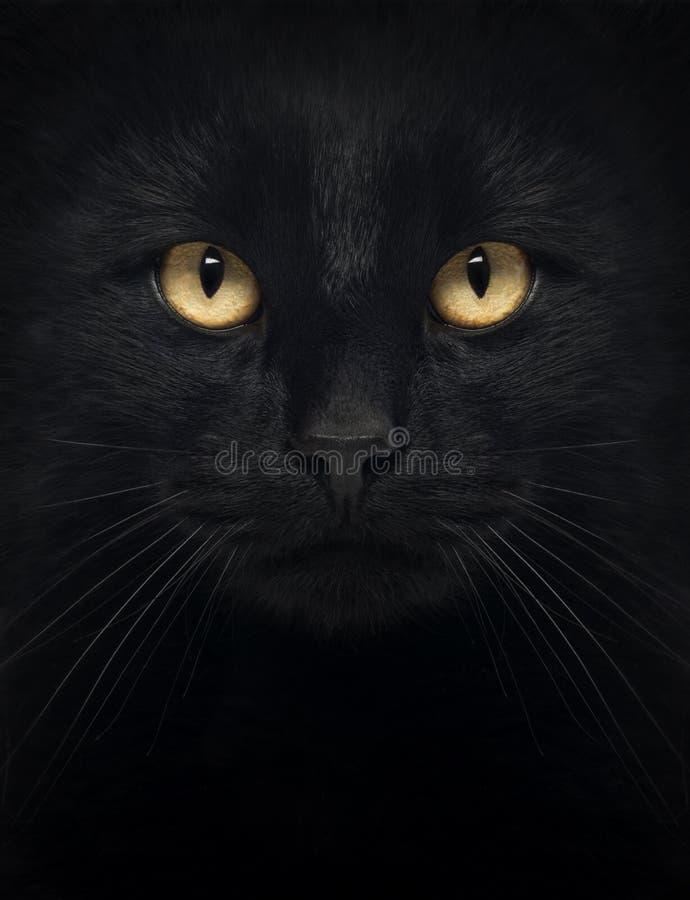 Primo piano di un gatto nero che esamina la macchina fotografica fotografia stock libera da diritti