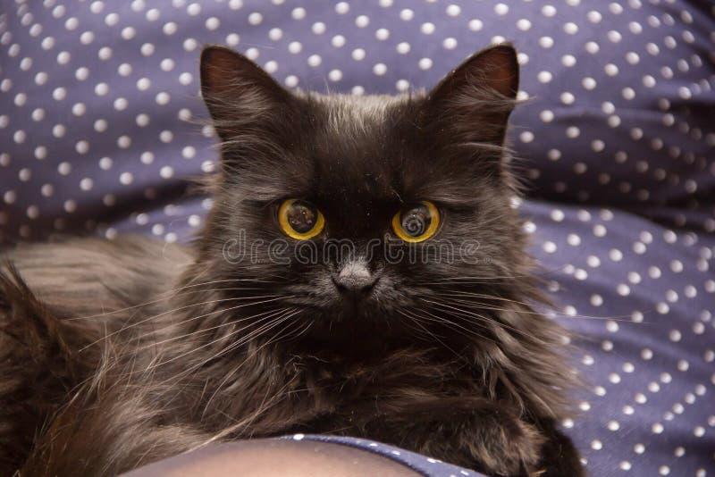 Primo piano di un gatto nero, esaminante macchina fotografica fotografia stock libera da diritti