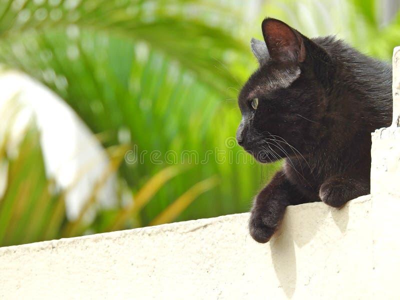 Primo piano di un gatto nero visto dal lato, trovantesi su una parete fotografie stock