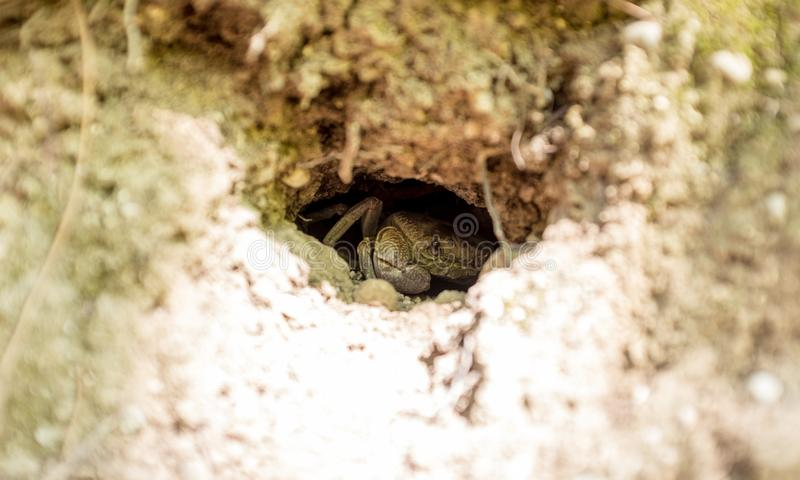 Primo piano di un granchio del mare che si nasconde in un foro roccioso vicino ad una spiaggia immagini stock