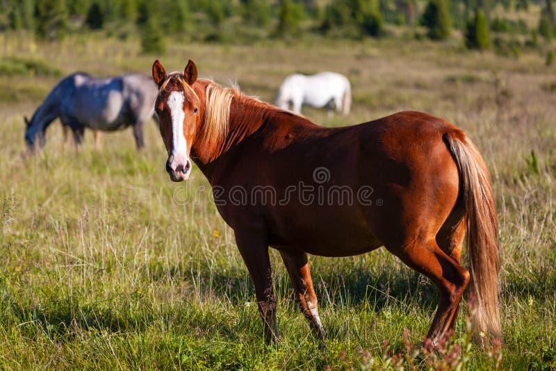 Primo piano di un gregge dei cavalli fotografie stock libere da diritti